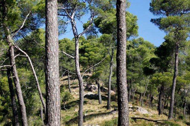 Imatge d'arxiu d'unes vistes dels boscos dels voltants de Castellar