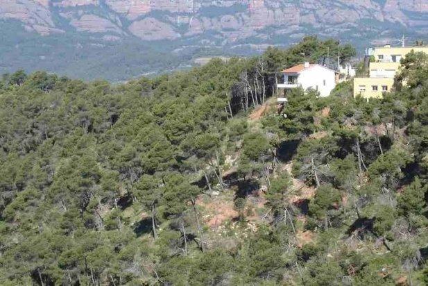 Zona boscosa de la urbanització del Racó _617x412