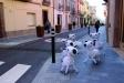 El Carrer Major, l'any passat, preparava el carrer Major amb animals de granja || M. ANTÚNEZ