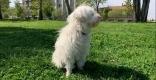 La Canela és una gossa d'aigua de 13 anys - R.G.