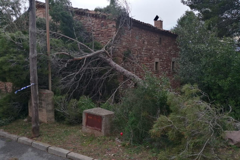 arbre _1440x961