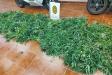 Comís de plantes de marihuana en un domicili del carrer Barcelona de Castellar. Els veïns van alertar de l'olor que provocaven || Policia Local